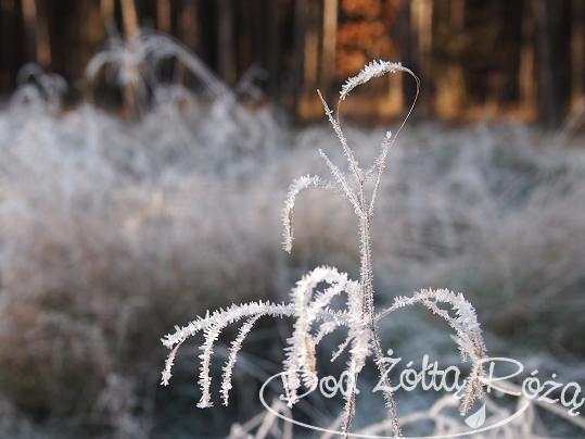 drobiazg zimowy